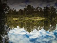 Spiegelungen im Fluss