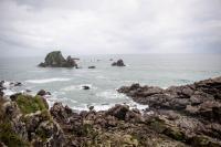 Westport - Küste mit Seelöwen
